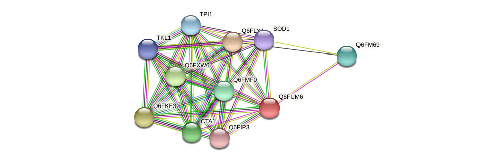 XP_446068.1 protein (Candida glabrata) - STRING interaction network