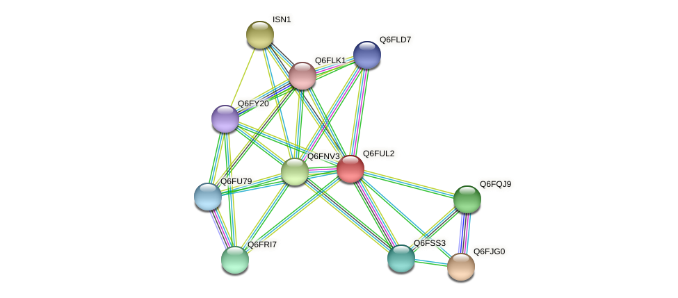 XP_446082.1 protein (Candida glabrata) - STRING interaction network