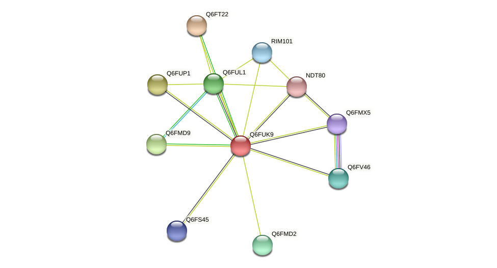 XP_446085.1 protein (Candida glabrata) - STRING interaction network