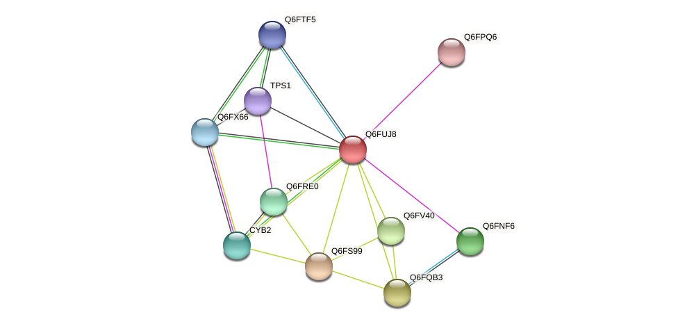 XP_446096.1 protein (Candida glabrata) - STRING interaction network