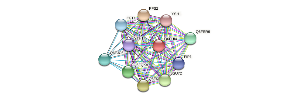 XP_446110.1 protein (Candida glabrata) - STRING interaction network
