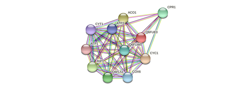 XP_446154.1 protein (Candida glabrata) - STRING interaction network