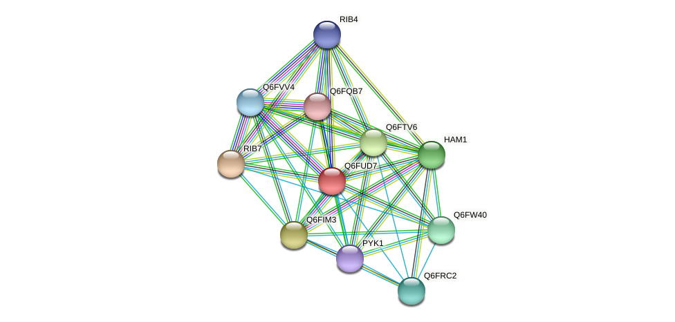XP_446157.1 protein (Candida glabrata) - STRING interaction network