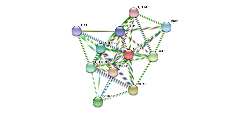 URA7 protein (Candida glabrata) - STRING interaction network