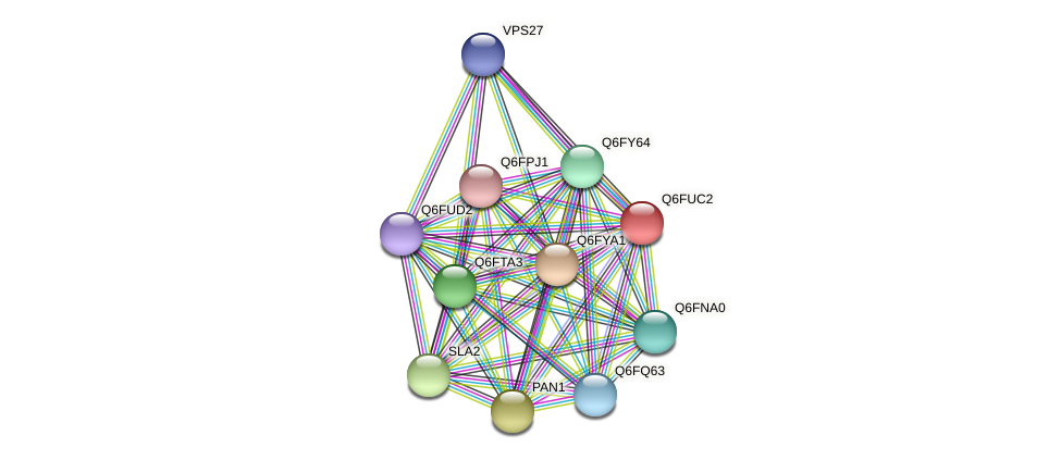 XP_446172.1 protein (Candida glabrata) - STRING interaction network
