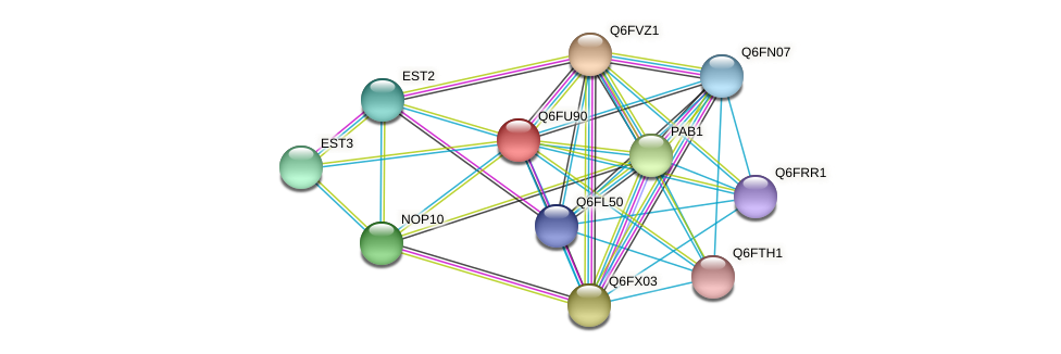 XP_446204.1 protein (Candida glabrata) - STRING interaction network