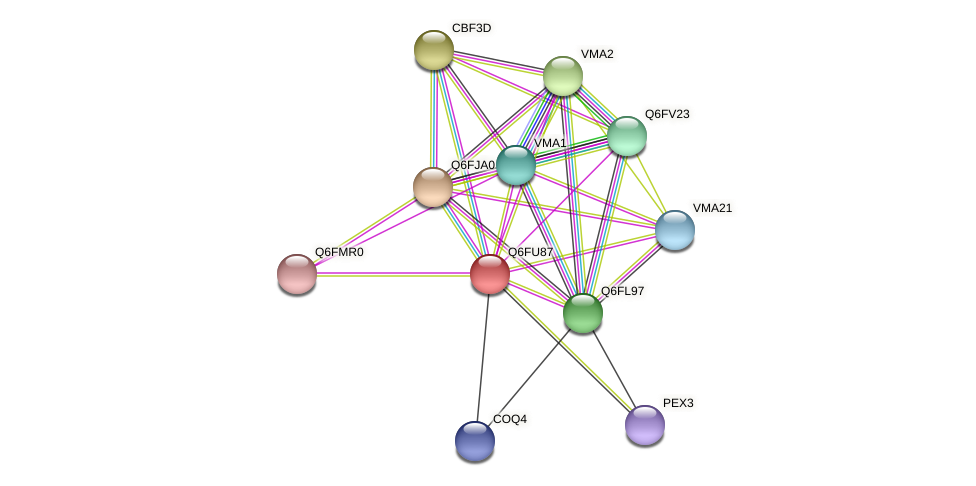 XP_446207.1 protein (Candida glabrata) - STRING interaction network