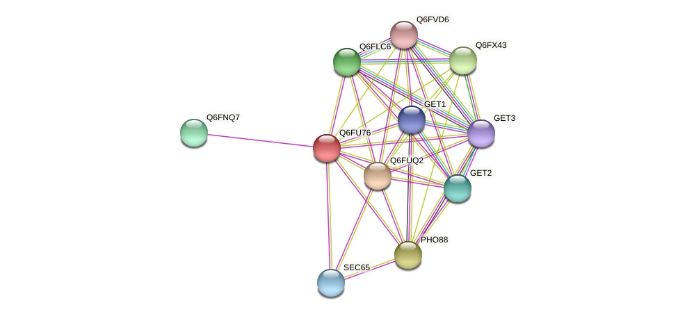 XP_446218.1 protein (Candida glabrata) - STRING interaction network