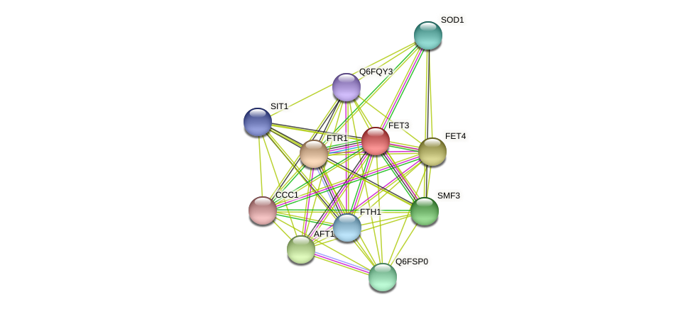 FET3 protein (Candida glabrata) - STRING interaction network