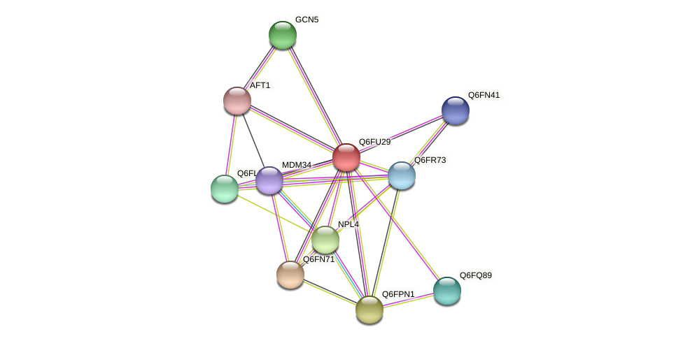 XP_446265.1 protein (Candida glabrata) - STRING interaction network