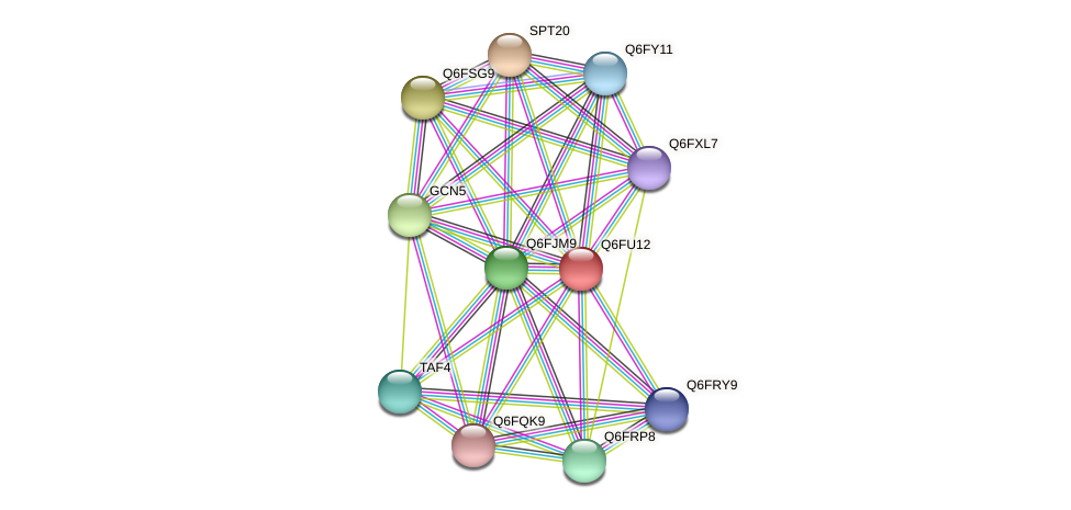 XP_446282.1 protein (Candida glabrata) - STRING interaction network