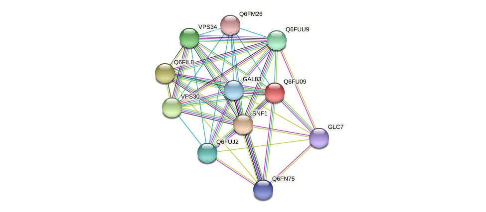 XP_446285.1 protein (Candida glabrata) - STRING interaction network