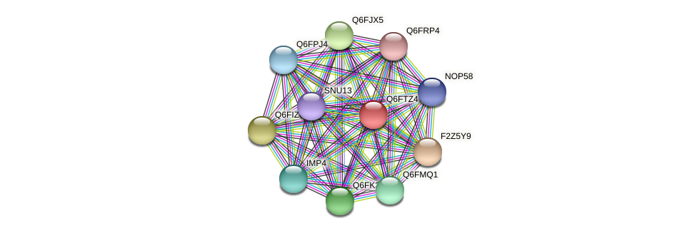 XP_446300.1 protein (Candida glabrata) - STRING interaction network