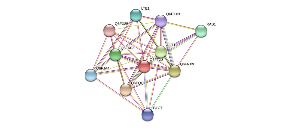 XP_446316.1 protein (Candida glabrata) - STRING interaction network
