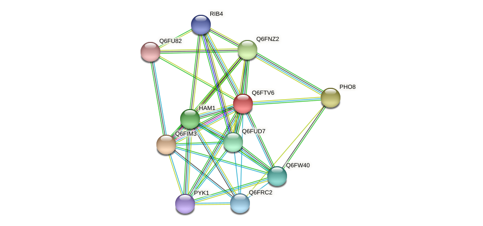 XP_446338.1 protein (Candida glabrata) - STRING interaction network