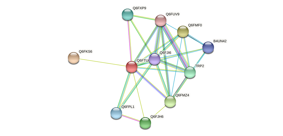 XP_446354.1 protein (Candida glabrata) - STRING interaction network
