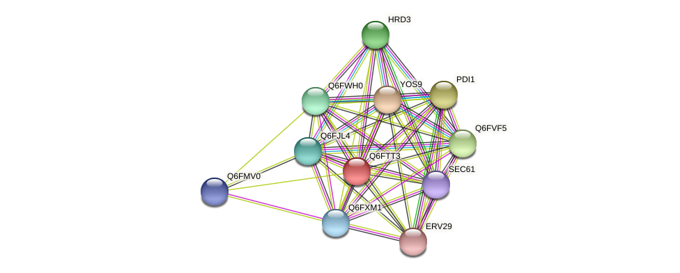 XP_446361.1 protein (Candida glabrata) - STRING interaction network