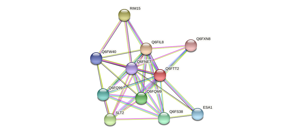 XP_446362.1 protein (Candida glabrata) - STRING interaction network