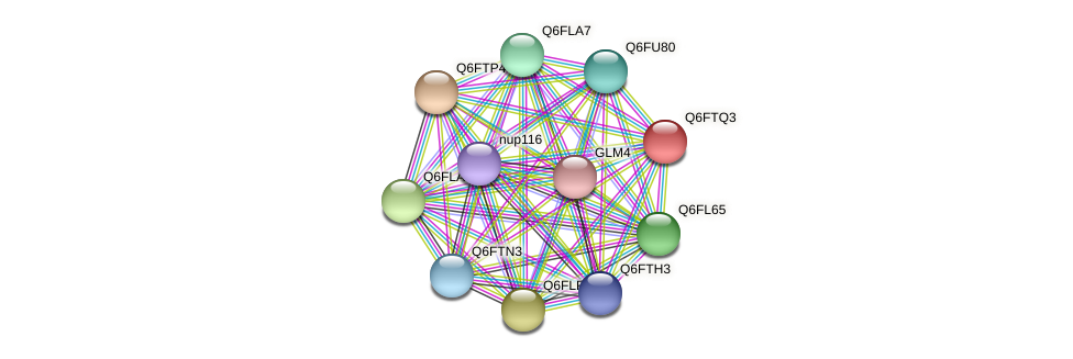 XP_446391.1 protein (Candida glabrata) - STRING interaction network