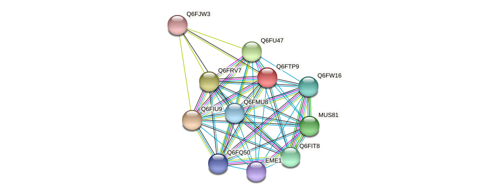 XP_446395.1 protein (Candida glabrata) - STRING interaction network