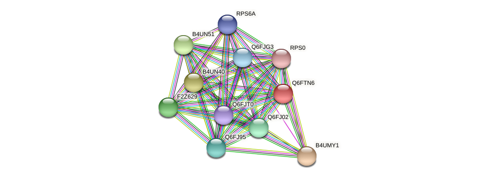 XP_446408.1 protein (Candida glabrata) - STRING interaction network
