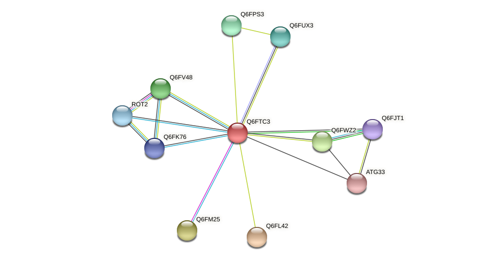 XP_446521.1 protein (Candida glabrata) - STRING interaction network