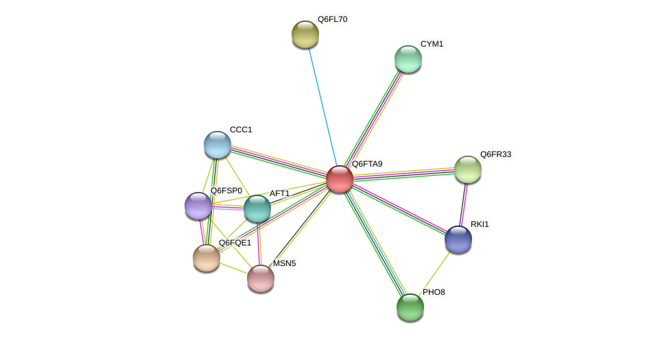 XP_446535.1 protein (Candida glabrata) - STRING interaction network