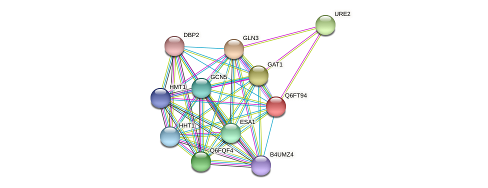 XP_446550.1 protein (Candida glabrata) - STRING interaction network