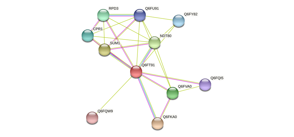 XP_446553.1 protein (Candida glabrata) - STRING interaction network