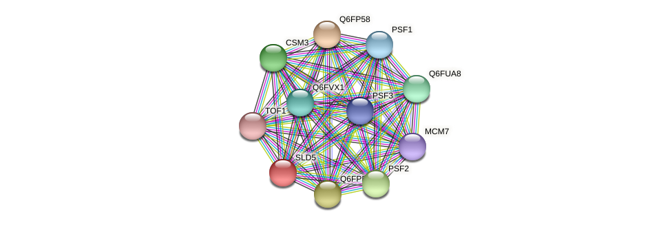 SLD5 protein (Candida glabrata) - STRING interaction network