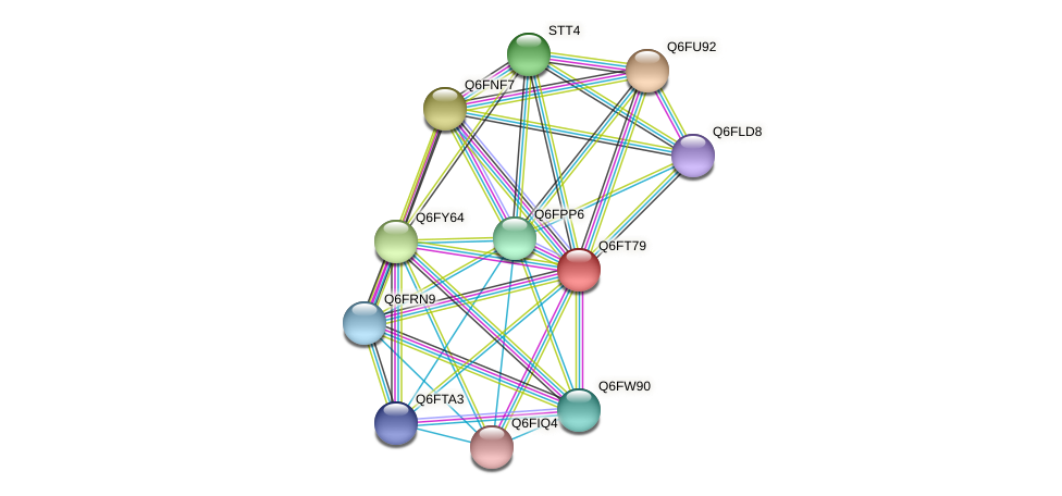 XP_446565.1 protein (Candida glabrata) - STRING interaction network