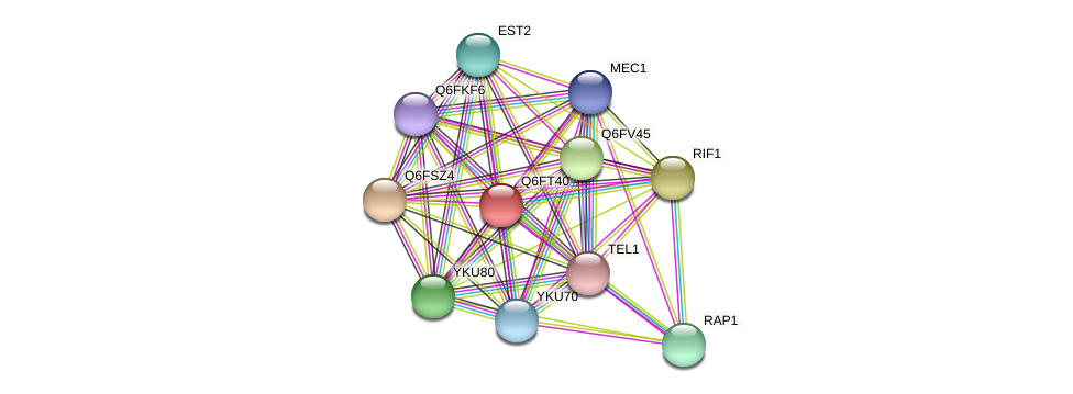 XP_446604.1 protein (Candida glabrata) - STRING interaction network