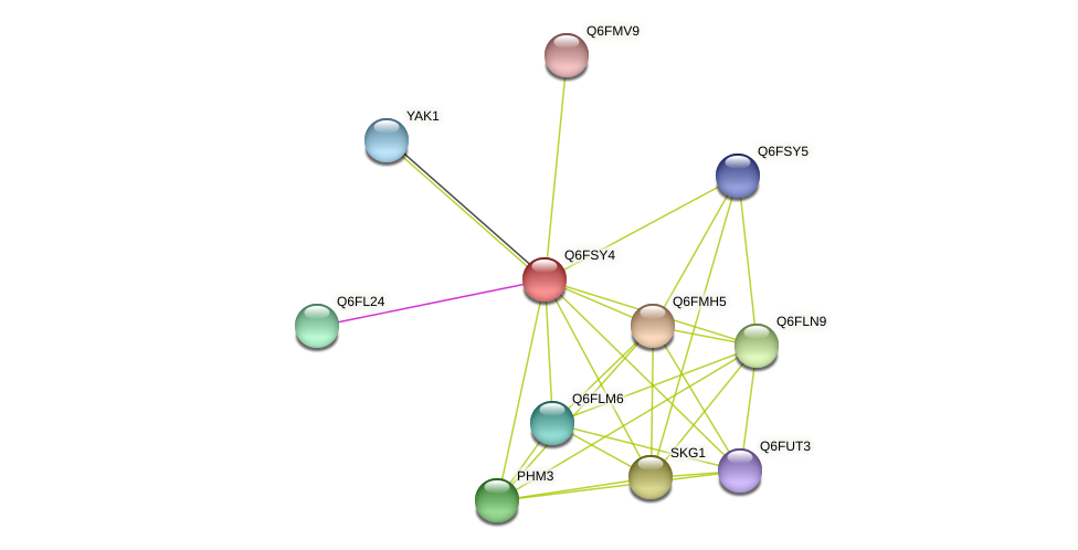 XP_446660.1 protein (Candida glabrata) - STRING interaction network