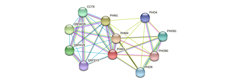 PHM3 protein (Candida glabrata) - STRING interaction network
