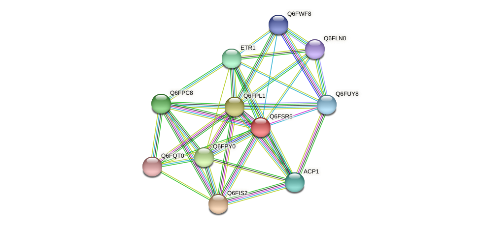 XP_446729.1 protein (Candida glabrata) - STRING interaction network
