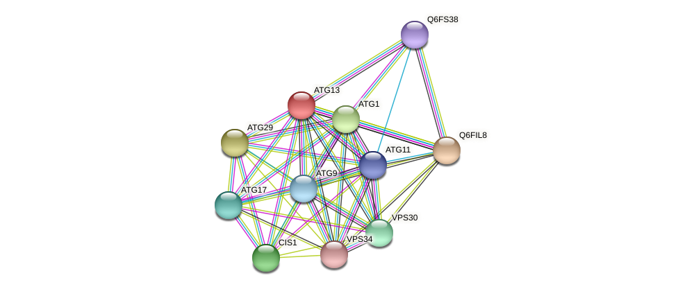 ATG13 protein (Candida glabrata) - STRING interaction network