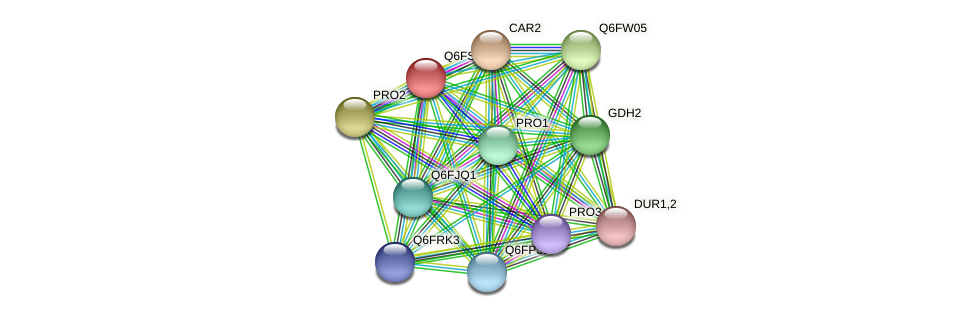 XP_446861.1 protein (Candida glabrata) - STRING interaction network
