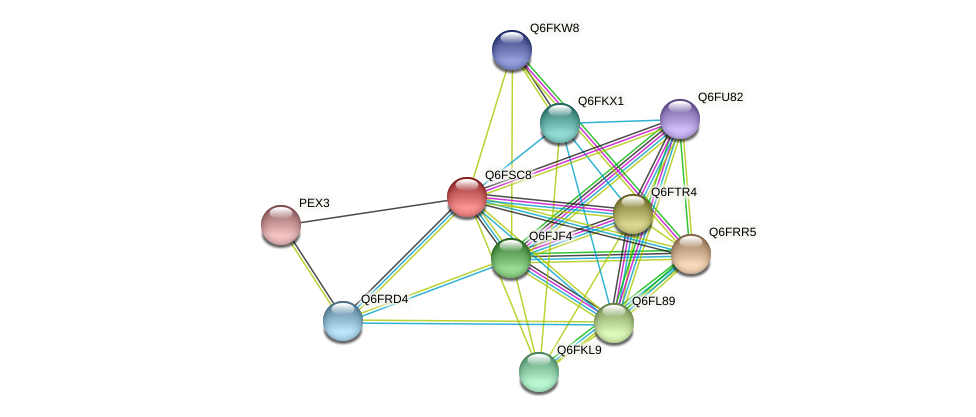 XP_446866.1 protein (Candida glabrata) - STRING interaction network