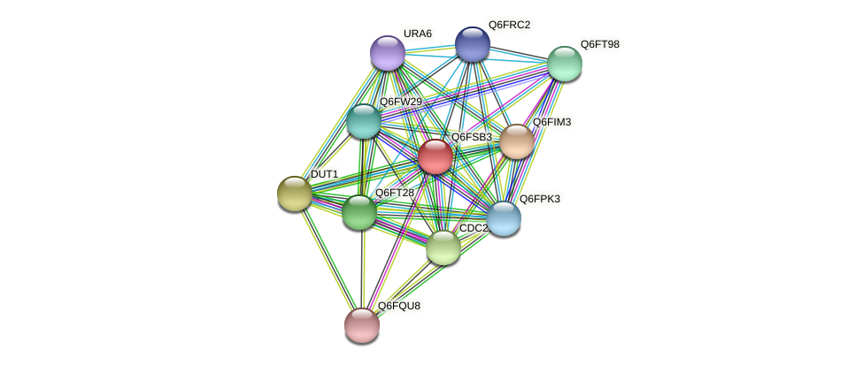 XP_446881.1 protein (Candida glabrata) - STRING interaction network