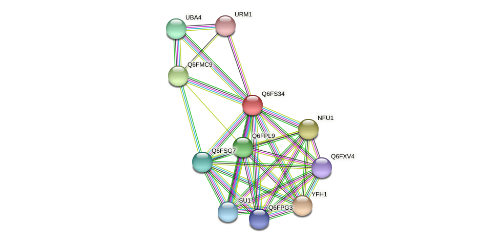 XP_446960.1 protein (Candida glabrata) - STRING interaction network