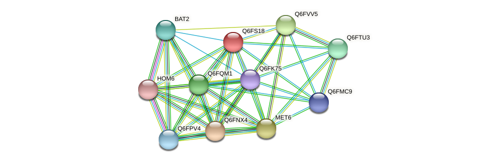 XP_446976.1 protein (Candida glabrata) - STRING interaction network