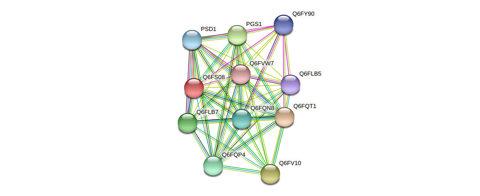 XP_446986.1 protein (Candida glabrata) - STRING interaction network