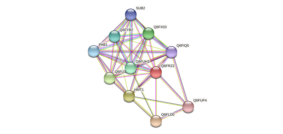 XP_447002.1 protein (Candida glabrata) - STRING interaction network