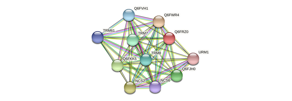 XP_447004.1 protein (Candida glabrata) - STRING interaction network
