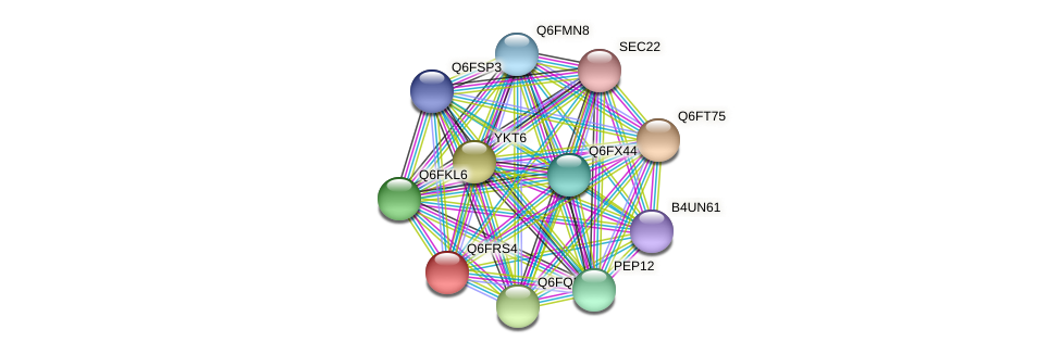 XP_447070.1 protein (Candida glabrata) - STRING interaction network