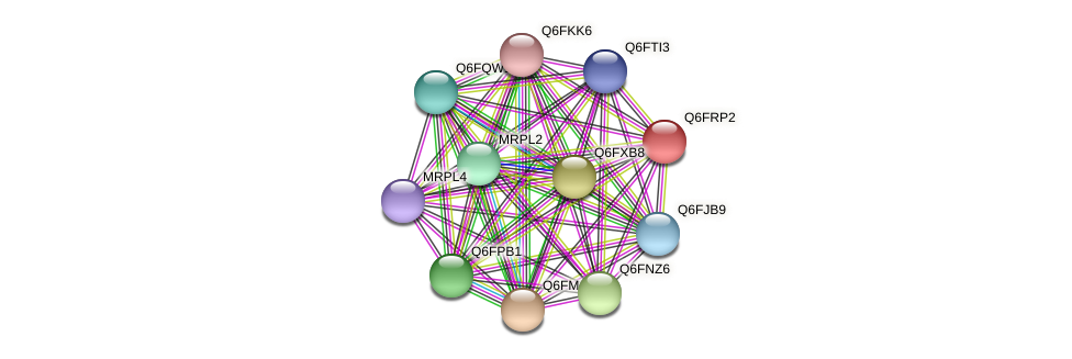 XP_447102.1 protein (Candida glabrata) - STRING interaction network