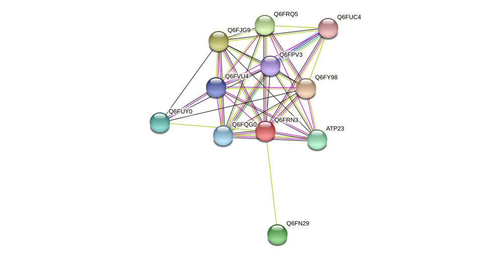 XP_447111.1 protein (Candida glabrata) - STRING interaction network