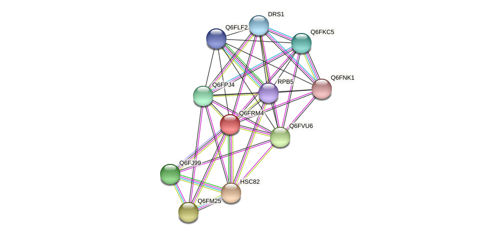 XP_447120.1 protein (Candida glabrata) - STRING interaction network