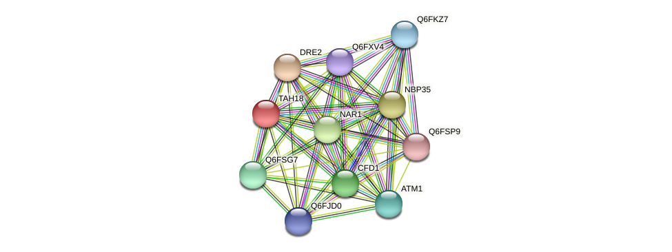 TAH18 protein (Candida glabrata) - STRING interaction network