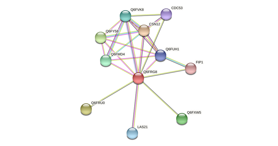 XP_447176.1 protein (Candida glabrata) - STRING interaction network